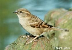 a photo of a bird