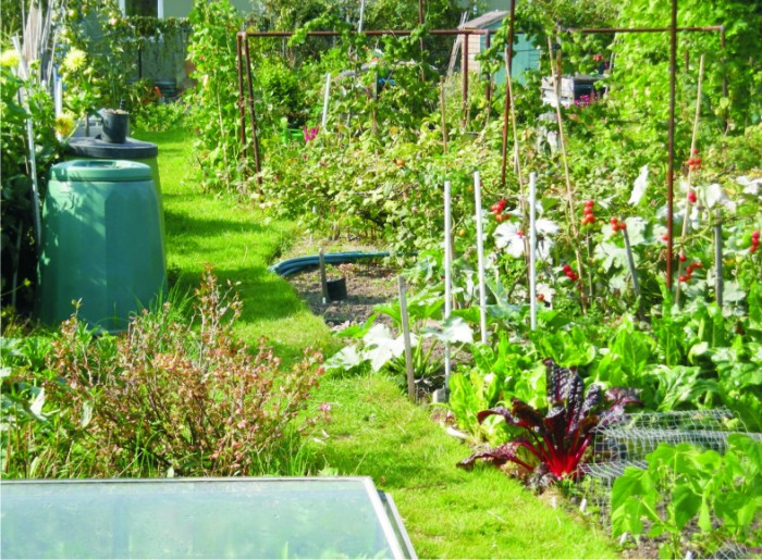 image of an allotment