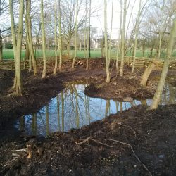 W Comm frog ponds 2016
