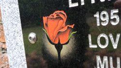Wall plaques rose closeup
