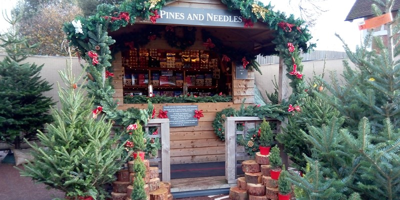 Pines And Needles Christmas Trees Enable Enable